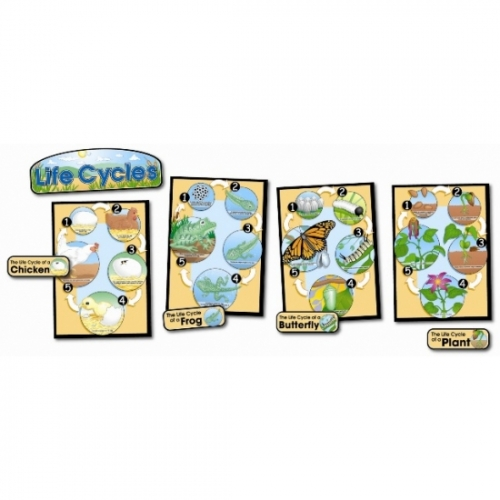 Life Cycle 4 Poster Set