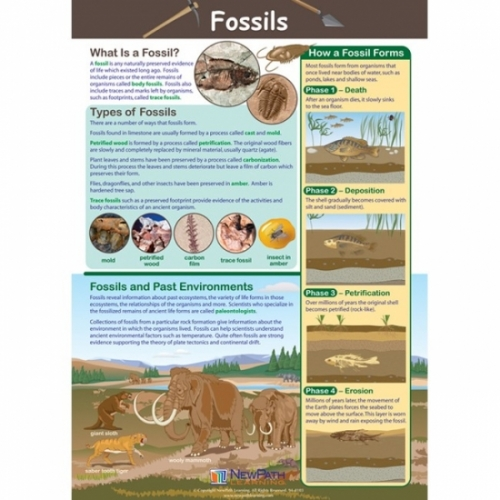 Fossil Formation Poster