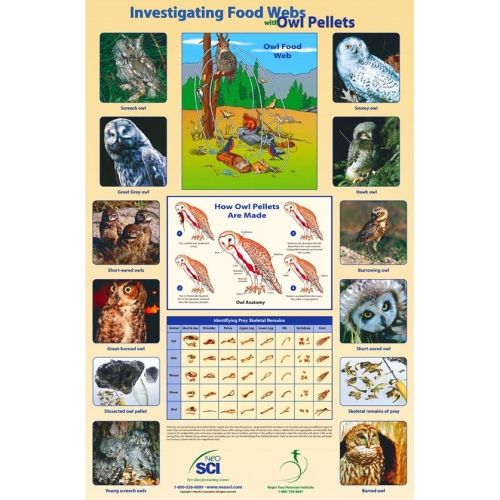 Owl Food Web Poster