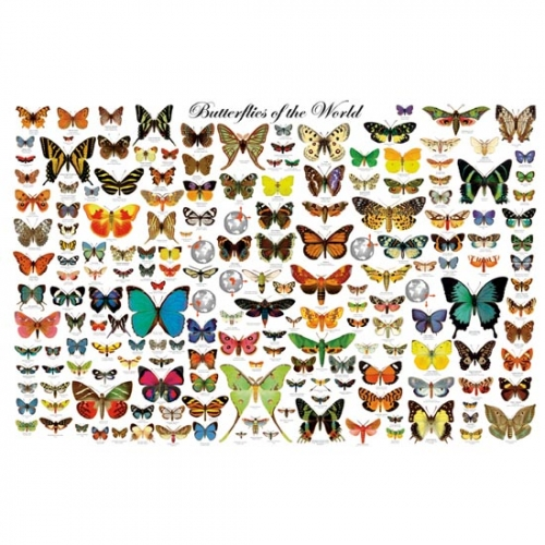 Butterflies of the World Laminated Poster