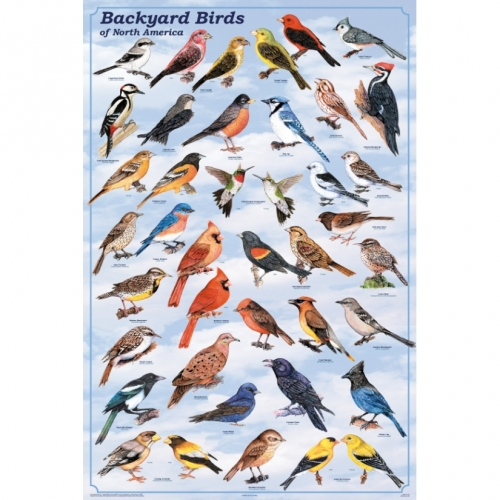 Backyard Birds of North America Poster