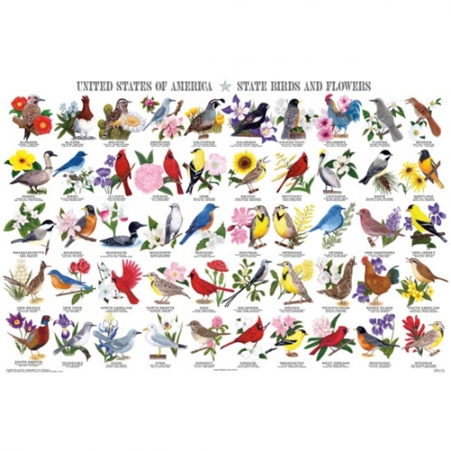 State Birds and Flowers Poster