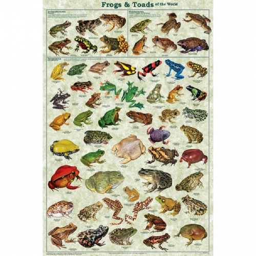 Frogs and Toads Poster