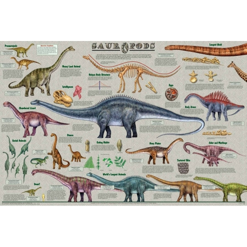 Sauropods Poster