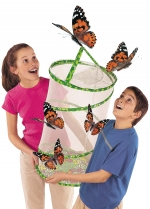 Butterfly Larvae / Butterfly Kit / Raise Butterflies