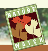 Nature-Watch